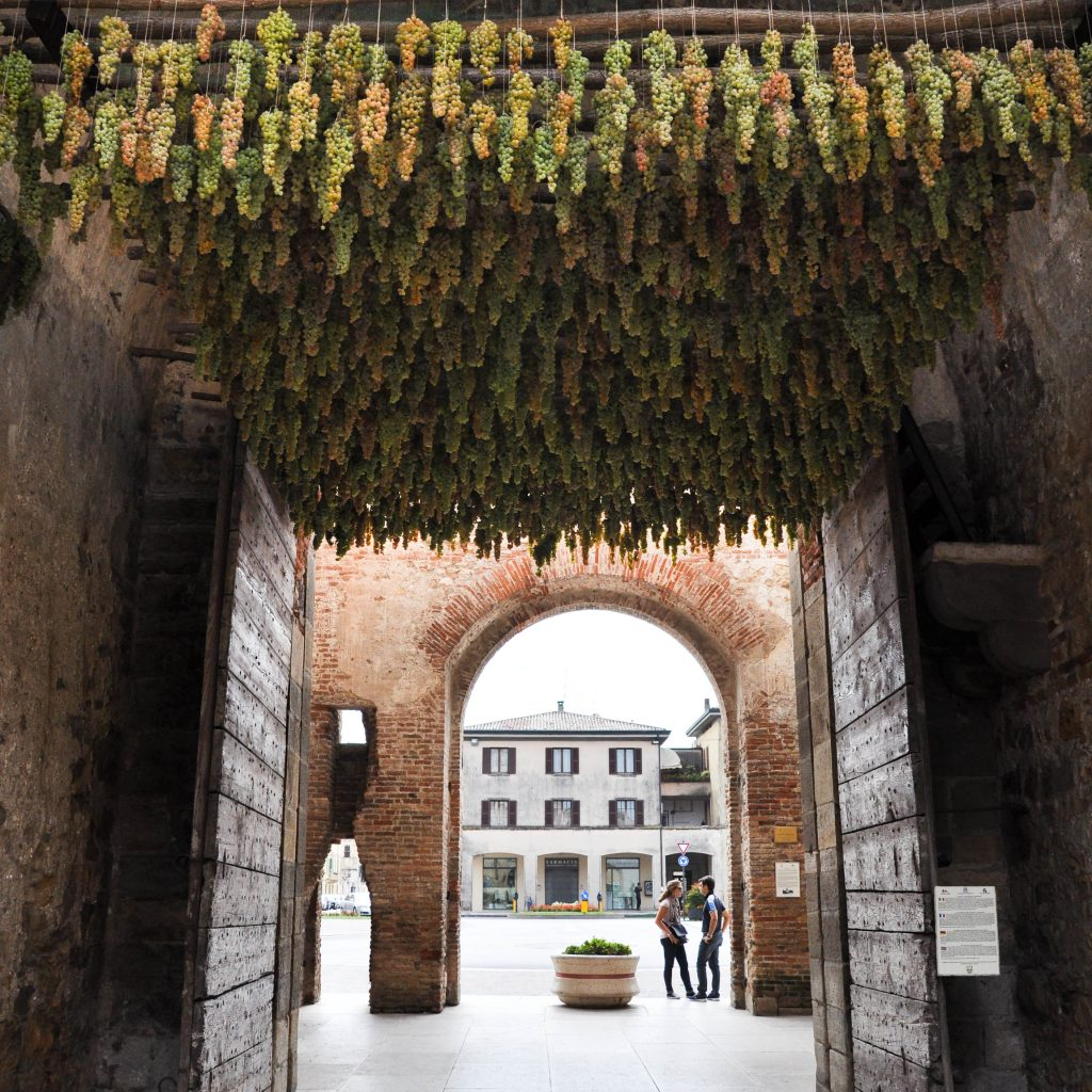 bunches-of-grapes-hanging-under-the-arch-of-one-of-the-gates-in-the-defense-wall-of-soave-veneto-italy-1-of-1-3