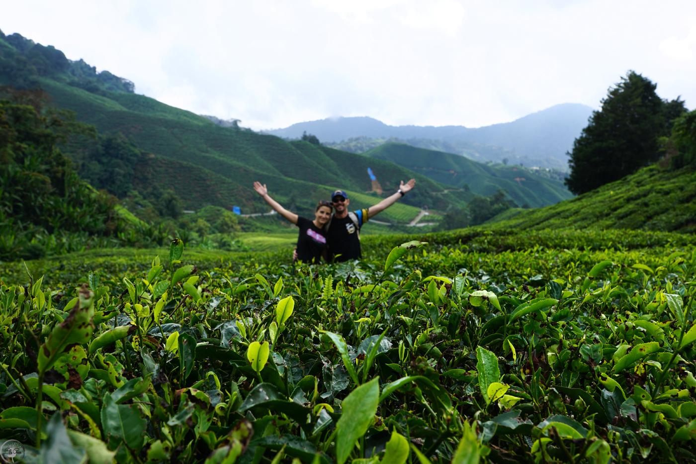 Reasons to Visit Malaysia lilla green